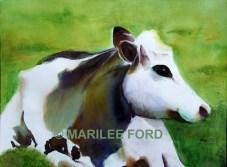 we-grow-happy-cows-c